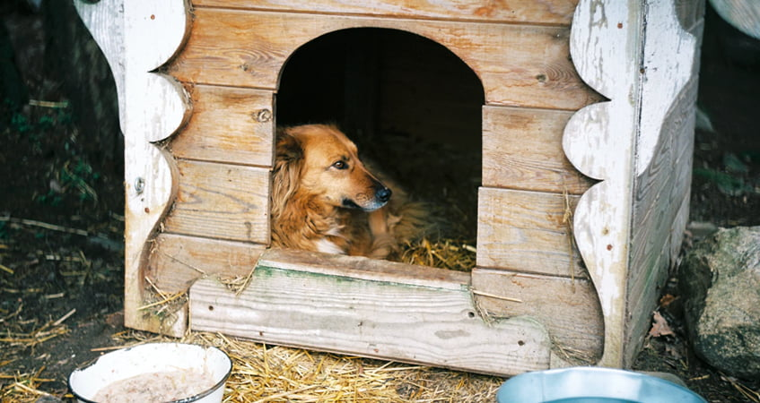 Can Golden Retrievers Live Outside? 4 Tips If You Had To
