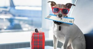 Can I Buy a Seat For My Dog On an Airplane?